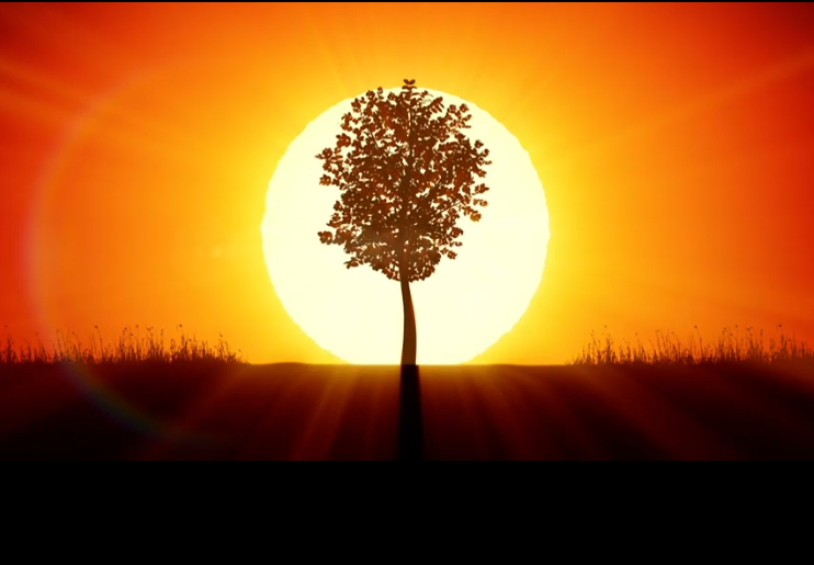 A picture of a tree growing to represent recovery
